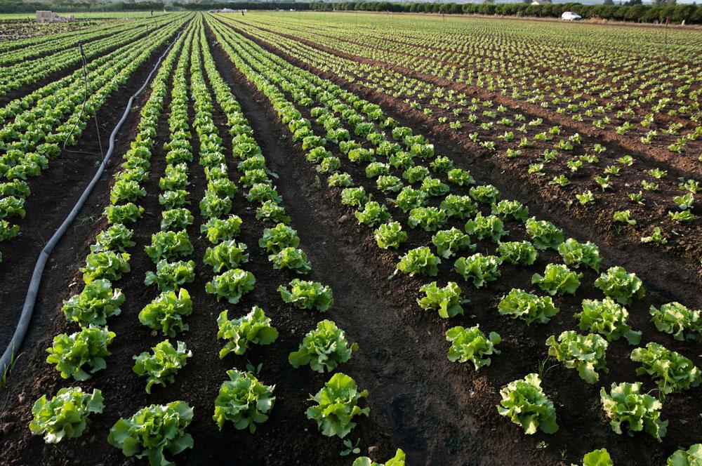 La mitad de la población catalana consume productos ecológicos